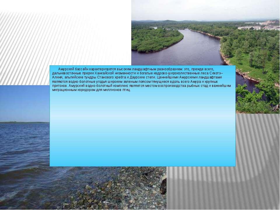 Амурский бассейн характеризуется высоким ландшафтным разнообразием: это, преж...