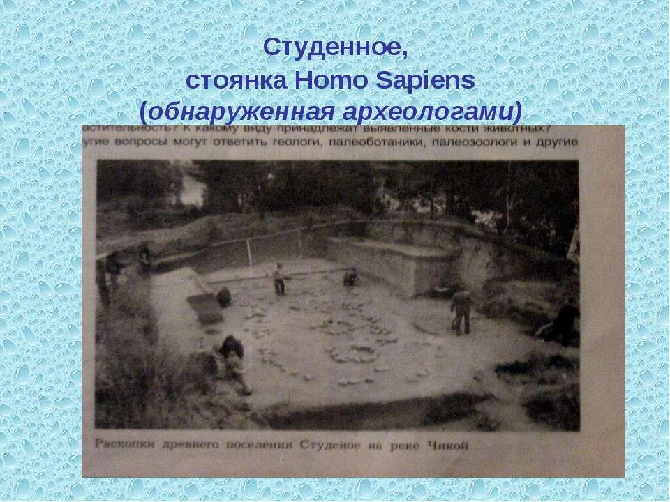 Студенное, стоянка Homo Sapiens (обнаруженная археологами)