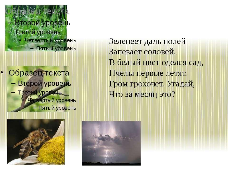 Зеленеет даль полей Запевает соловей. В белый цвет оделся сад, Пчелы первые л...