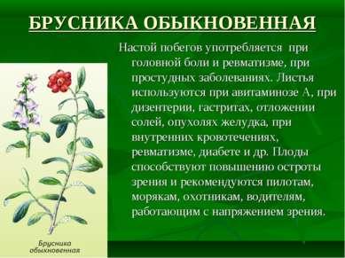 БРУСНИКА ОБЫКНОВЕННАЯ Настой побегов употребляется при головной боли и ревмат...