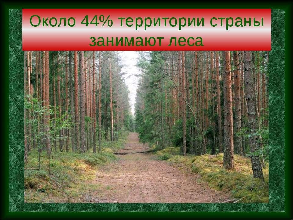 Около 44% территории страны занимают леса