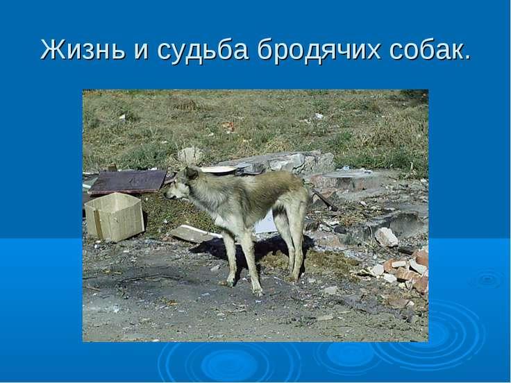Жизнь и судьба бродячих собак.