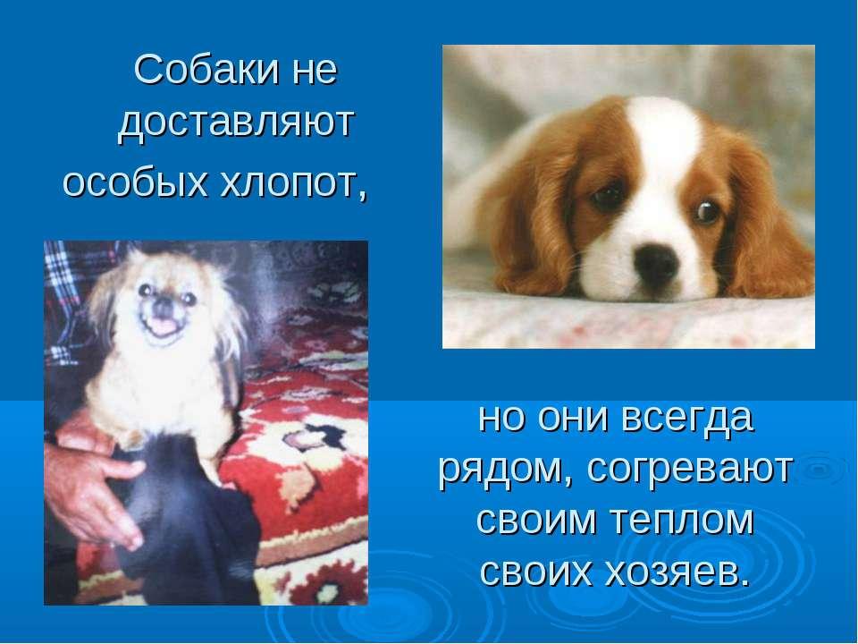 Собаки не доставляют особых хлопот, но они всегда рядом, согревают своим тепл...