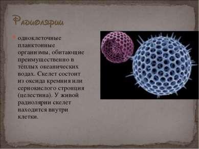 одноклеточные планктонные организмы, обитающие преимущественно в тёплых океан...