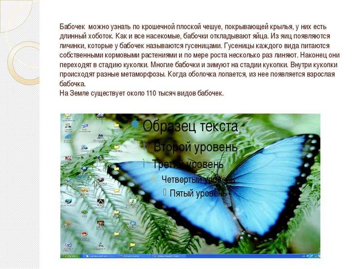 Бабочек можно узнать по крошечной плоской чешуе, покрывающей крылья, у них ес...