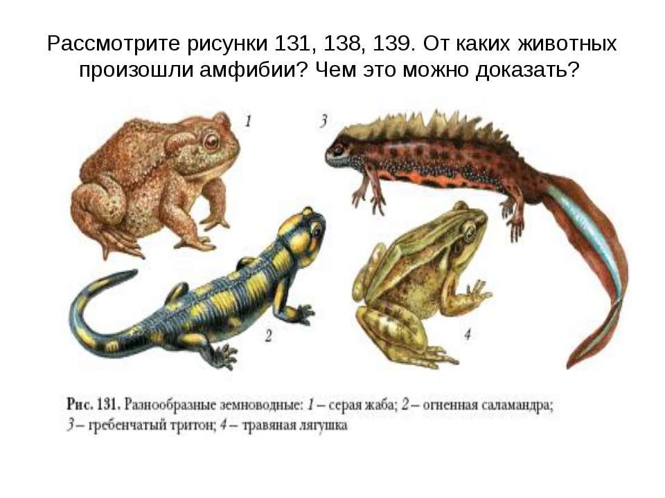 Рассмотрите рисунки 131, 138, 139. От каких животных произошли амфибии? Чем э...