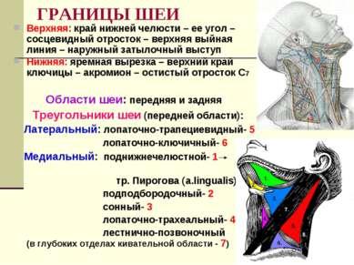 ГРАНИЦЫ ШЕИ Верхняя: край нижней челюсти – ее угол – сосцевидный отросток – в...