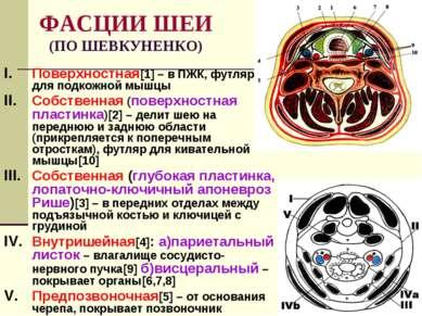 ФАСЦИИ ШЕИ (ПО ШЕВКУНЕНКО) Поверхностная[1] – в ПЖК, футляр для подкожной мыш...