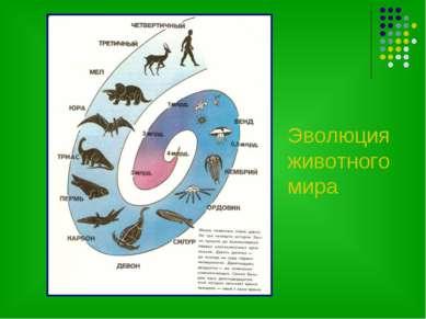 Эволюция животного мира