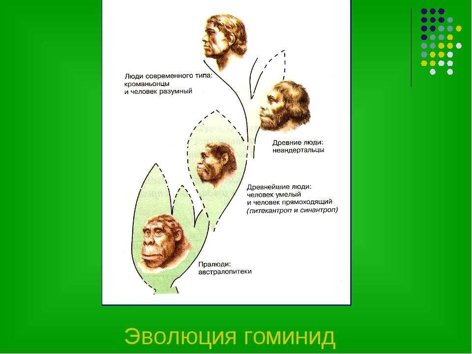 Эволюция гоминид