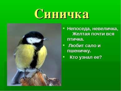 Синичка Непоседа, невеличка, Желтая почти вся птичка. Любит сало и пшеничку. ...