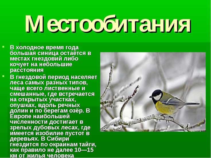 Местообитания В холодное время года большая синица остаётся в местах гнездови...