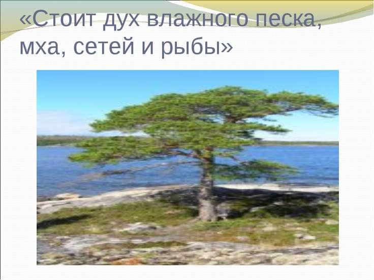 «Стоит дух влажного песка, мха, сетей и рыбы»