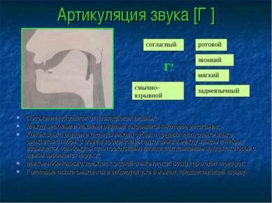 Артикуляция звука [Г′] Положение губ зависит от последующих гласных; Между ве...