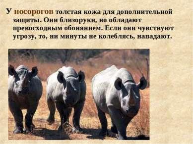 У носорогов толстая кожа для дополнительной защиты. Они близоруки, но обладаю...