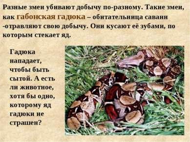 Разные змеи убивают добычу по-разному. Такие змеи, как габонская гадюка – оби...