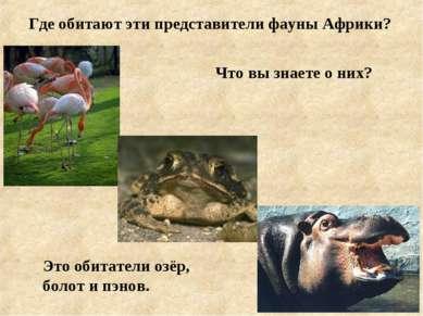 Где обитают эти представители фауны Африки? Что вы знаете о них? Это обитател...