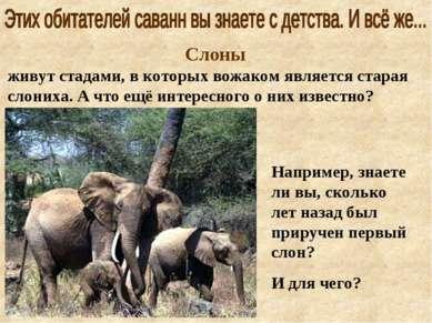 Слоны живут стадами, в которых вожаком является старая слониха. А что ещё инт...