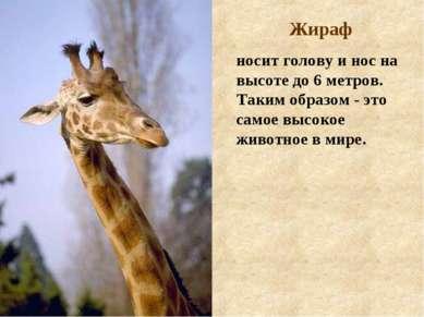 Жираф носит голову и нос на высоте до 6 метров. Таким образом - это самое выс...