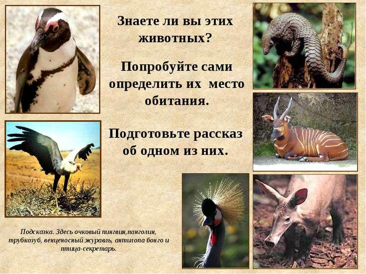 Попробуйте сами определить их место обитания. Знаете ли вы этих животных? Под...
