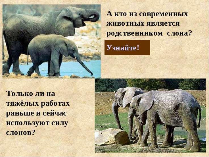 Только ли на тяжёлых работах раньше и сейчас используют силу слонов?
