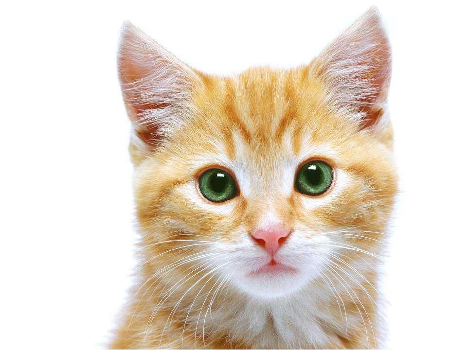 Из каких двух предлогов можно составить название домашнего животного?