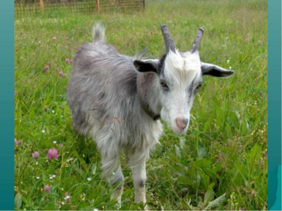 Из каких трёх предлогов можно составить название домашнего животного?