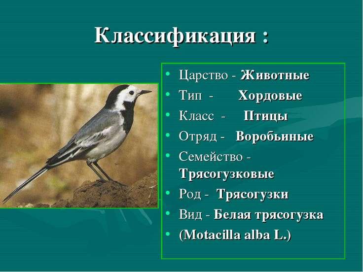 Классификация : Царство - Животные Тип - Хордовые Класс - Птицы Отряд - Вороб...
