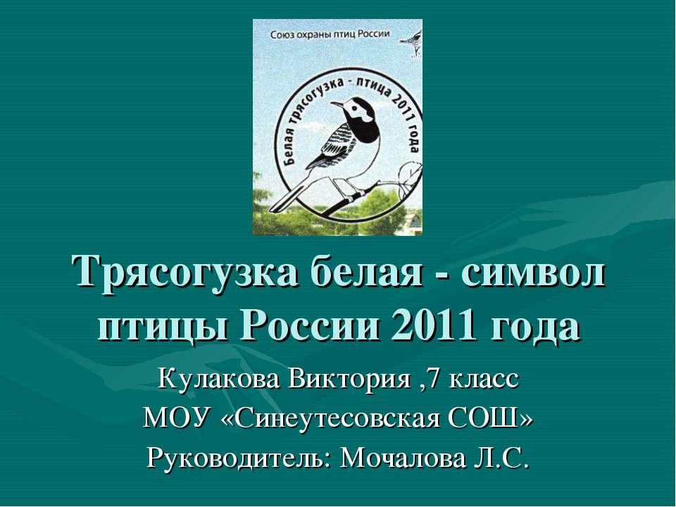 Трясогузка белая - символ птицы России 2011 года Кулакова Виктория ,7 класс М...