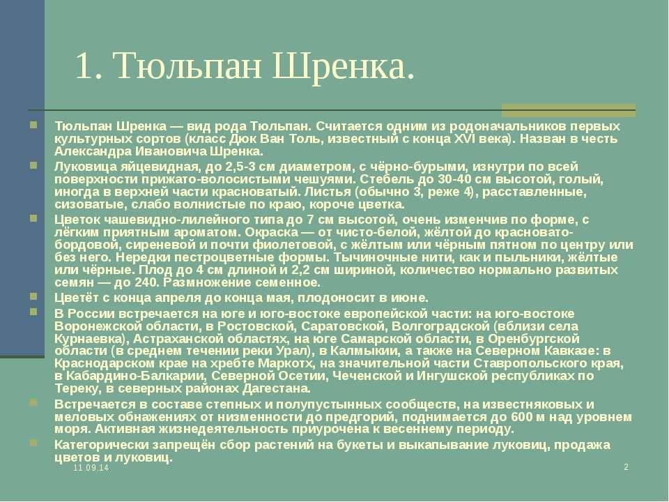 * * 1. Тюльпан Шренка. Тюльпан Шренка — вид рода Тюльпан. Считается одним из ...