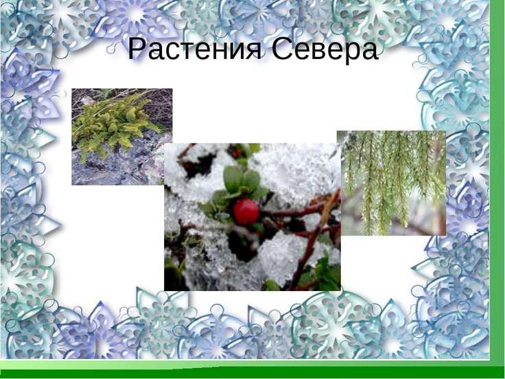 Растения Севера