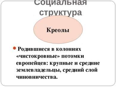 Социальная структура Родившиеся в колониях «чистокровные» потомки европейцев:...
