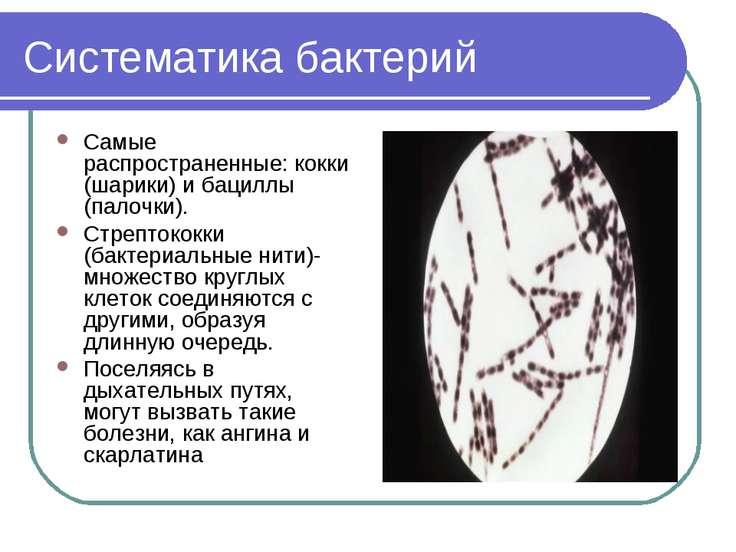 Систематика бактерий Самые распространенные: кокки (шарики) и бациллы (палочк...