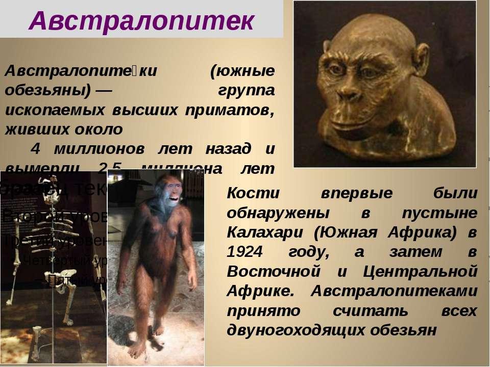 Австралопитек Австралопите ки (южные обезьяны)— группа ископаемых высших при...