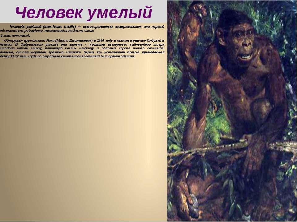 Челове к уме лый (лат.Homo habilis) — высокоразвитый австралопитек или первы...