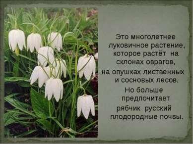 Это многолетнее луковичное растение, которое растёт на склонах оврагов, на оп...