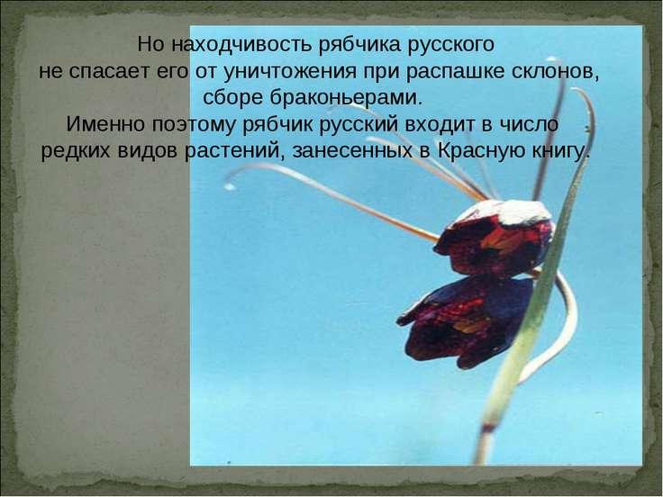 Но находчивость рябчика русского не спасает его от уничтожения при распашке с...
