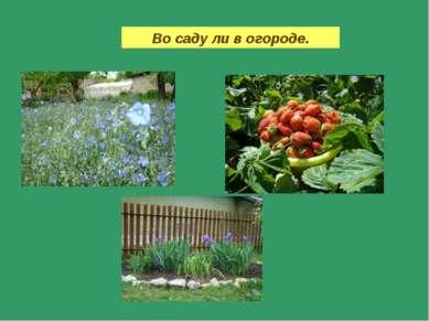Во саду ли в огороде.