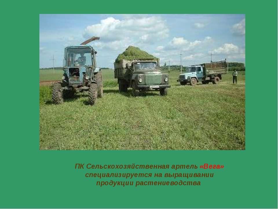 ПК Сельскохозяйственная артель «Вега» специализируется на выращивании продукц...
