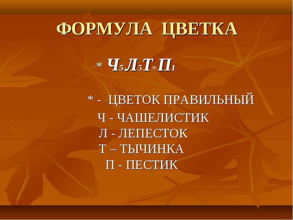 ФОРМУЛА ЦВЕТКА * Ч5 Л5Т П1 * - ЦВЕТОК ПРАВИЛЬНЫЙ ∞ Ч - ЧАШЕЛИСТИК Л - ЛЕПЕСТО...