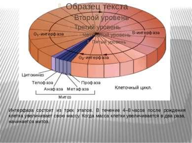 Клеточный цикл. Интерфаза состоит из трех этапов. В течение 4–8часов после р...