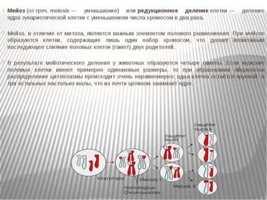 Мейоз(отгреч.meiosis— уменьшение) илиредукционное делениеклетки— делен...