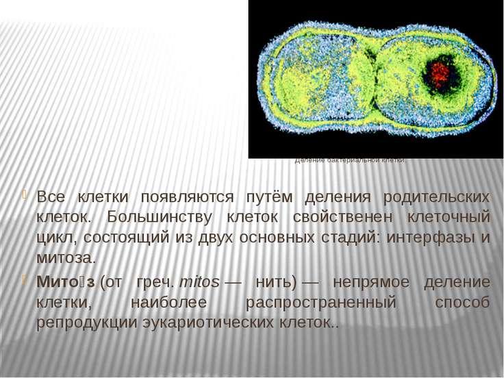 Деление бактериальной клетки. Все клетки появляются путём деления родительски...