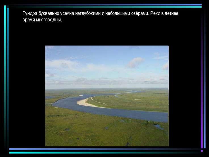 Тундра буквально усеяна неглубокими и небольшими озёрами. Реки в летнее время...