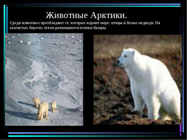 Животные Арктики. Среди животных преобладают те, которых кормит море: птицы и...