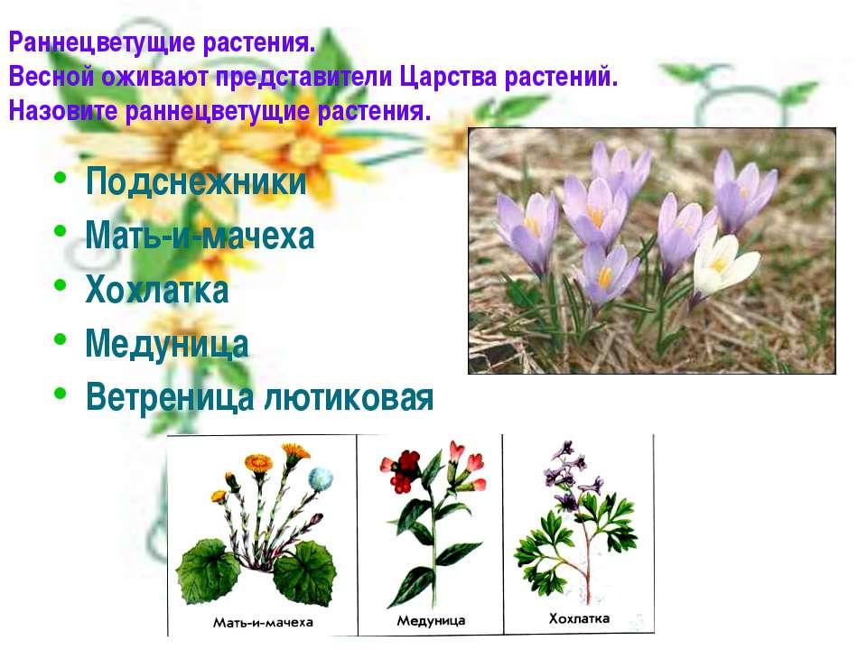 Раннецветущие растения. Весной оживают представители Царства растений. Назови...