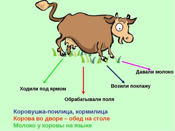 Ходили под ярмом Обрабатывали поля Возили поклажу Давали молоко Коровушка-пои...