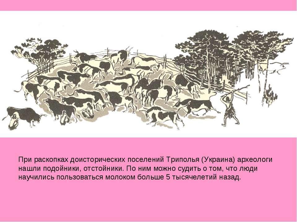 При раскопках доисторических поселений Триполья (Украина) археологи нашли под...