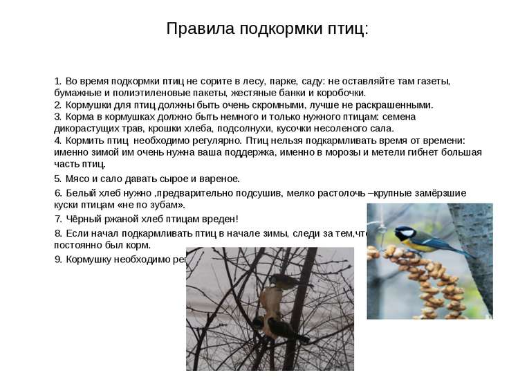 Правила подкормки птиц: 1. Во время подкормки птиц не сорите в лесу, парке, с...