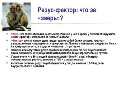 Резус-фактор: что за «зверь»? Резус - это такая обезьяна (мартышка). Именно у...